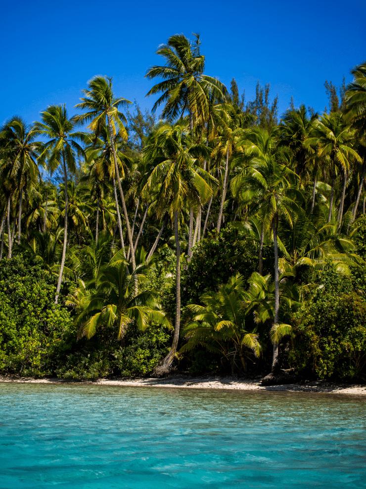 lagoon private island palmtrees